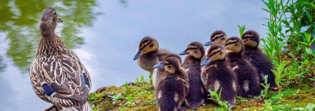 Birds of Moseley Park